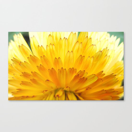 Overwhelming Beauty Canvas Print