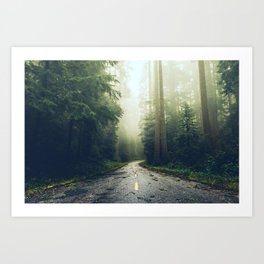 Redwood Forest Adventure - Nature Photography Art Print