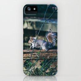Ardilla en un parque de Londres iPhone Case