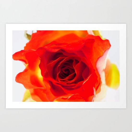 Inside the rose Art Print