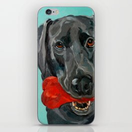 Ozzie the Black Labrador Retriever iPhone Skin