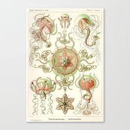 Haeckel jelly fish vintage Canvas Print