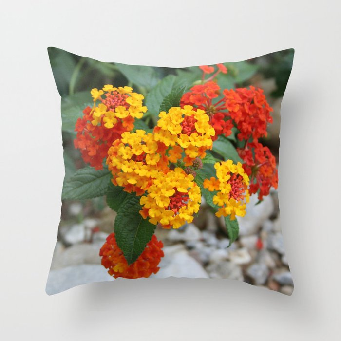 Macro Of Shrub Verbenas or Lantanas (Lantana Camara)  Throw Pillow