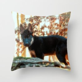 12 weeks old Shepherd puppy Throw Pillow