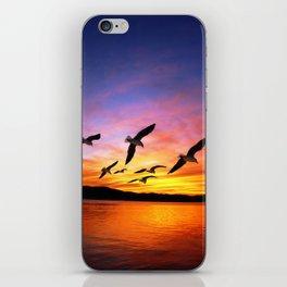 Seagull Sunset iPhone Skin