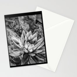 Black and White Lotus Flowers Stationery Cards