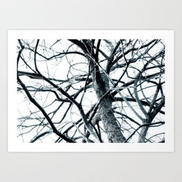 Winter Trees #photography #outdoor #nature Art Print