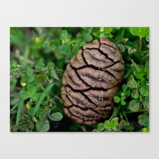 Seed of Sequoia Canvas Print