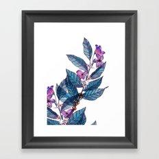 Botanical study of a coffee branch Framed Art Print