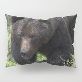 King of forest, male brown bear approaching Pillow Sham