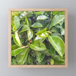 The rubber fig Framed Mini Art Print