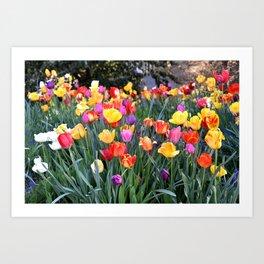 VIBRANT BOUQUET OF TULIPS - SPRINGTIME FLOWERS Art Print