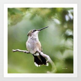 Charming Hummingbird Art Print