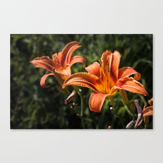 Orange Yellow Fire Lily Canvas Print