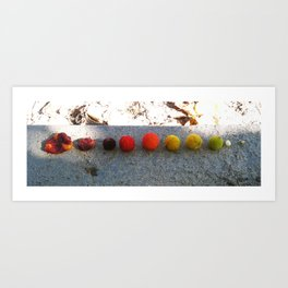 Life Cycle of a Tree Berry Art Print