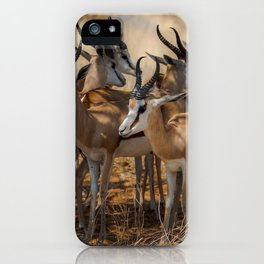 Springbok Herd iPhone Case