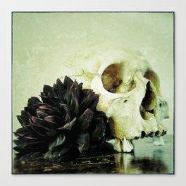 Vanitas Black Dahlia Canvas Print