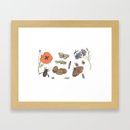 Common place miracles -Natural History Part II Framed Art Print