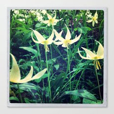 Fawn Lilly  Canvas Print