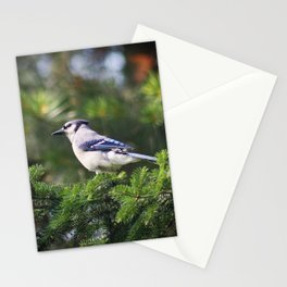Adult Bluejay Bird Color Photo Stationery Cards