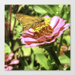 Not A Moth But A Small Skipper Butterfly Canvas Print