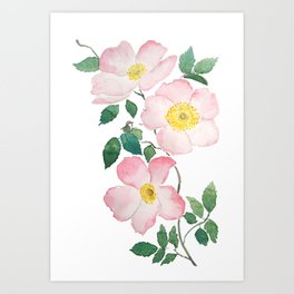 pink rosa rubiginosa watercolor Art Print