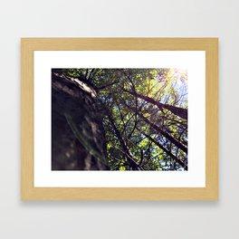 Forest of Hope Framed Art Print