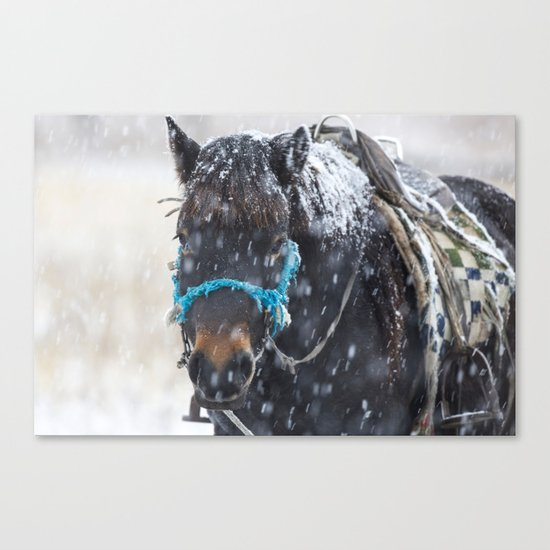 Winter Horse I Canvas Print