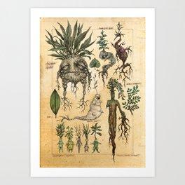 Mandragora Radix Art Print