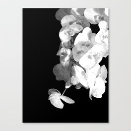 White Orchids Black Background Canvas Print