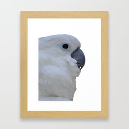 Side Portrait Of A Blue-Eyed Cockatoo Isolated Framed Art Print