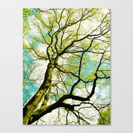 Tree in springtime (i am a tree lover  Canvas Print