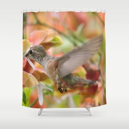 Little Ms. Hummingbird in for More Licks Shower Curtain