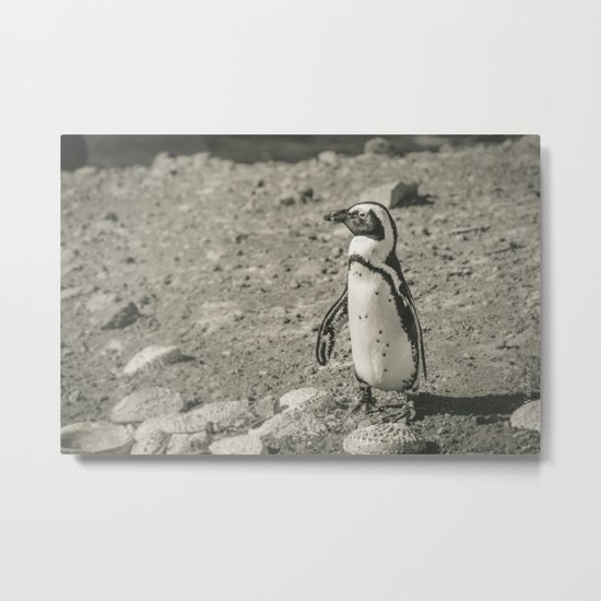 Black and White African Penguin Metal Print