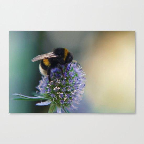 Buzz fine art photography Canvas Print