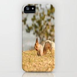 Squirrel's Lunch Break #decor #society6 iPhone Case