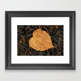 On a bed of sea wrack Framed Art Print