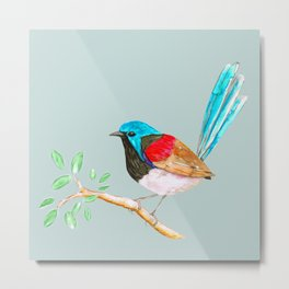 Variegated fairy wren Metal Print