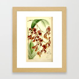 Cyrtochilum serratum Framed Art Print