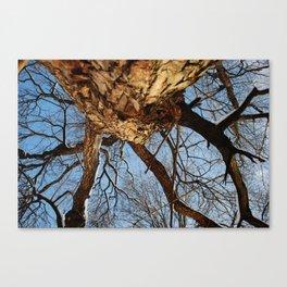 tree arms Canvas Print