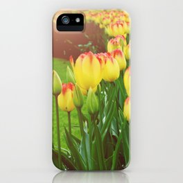 Yellow Red Tulips iPhone Case