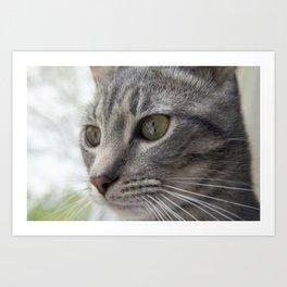 Contemplative Kitten Art Print