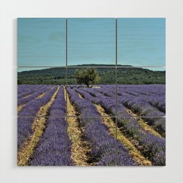 Lavender field, Provence, France Wood Wall Art