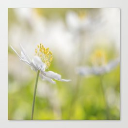 White Wood Anemone Flower in Forest Bokeh Background #decor #society6 #buyart Canvas Print