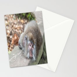 Crab-eating Macaque VI (Balinese Monkey) Stationery Cards