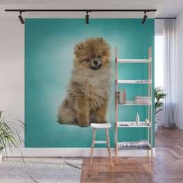 Cute Pomeranian Dog Wall Mural