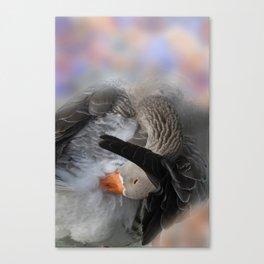 vanity fair -1- Canvas Print