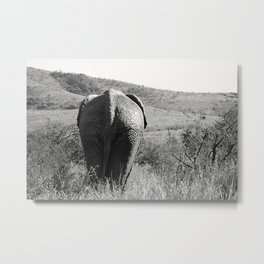 Elephant in Africa Metal Print