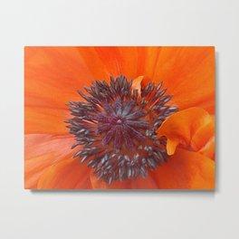 Poppy Seeds  Metal Print