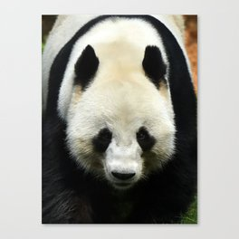 Big Panda Canvas Print